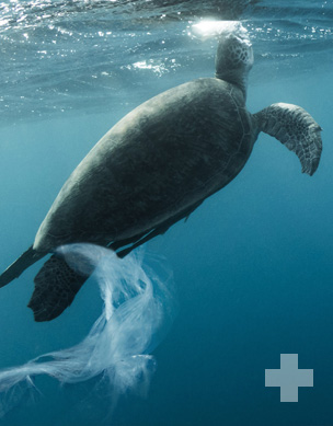 Global Tourism Plastics Initiative Takes On One of the Worst Polluters